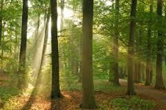 Massief houten bedden van Duits kwaliteit hout uit duurzaam bosbeheer