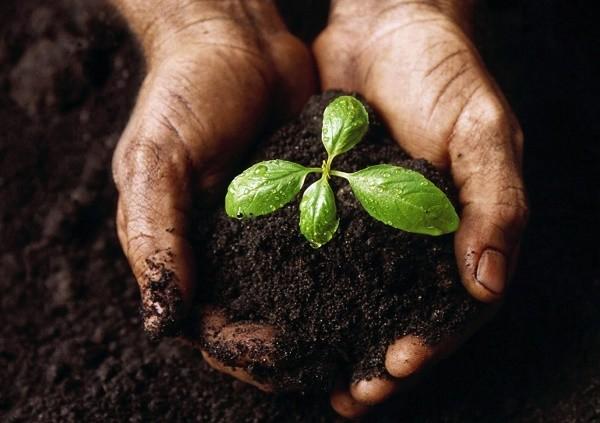 Oud matras afvoeren, recyclen en herwinnen voor grondstoffen of biologisch laten afbreken tot compost ?