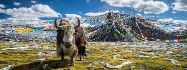 Yak wol dekbedden van de Jak uit Tibet